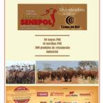 Faça download do catálogo do Leilão Virtual Parceiros do Senepol