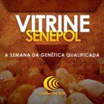 Vitrine Senepol: a semana da genética qualificada do Senepol