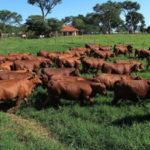 Parceiros do Senepol – Investindo na eficiência que vem dos testes