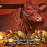 Programa Safiras do Senepol em 2013 chega em sua 7a. Edição.