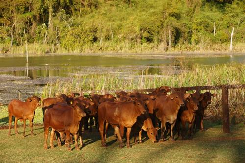 fazenda-itasenepol-foto1