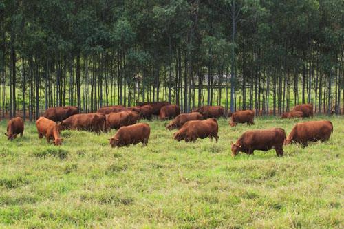 fazenda-santahelena-foto1