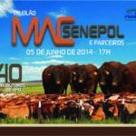 MAC Senepol faz primeiro leilão em parceria com a GRAMA Senepol vendendo 40 touros
