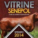 Vitrine do Senepol agora tem um mês de grandes negócios com assessoria do Senepol Mais.