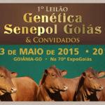 Senepol tem outro capítulo deevolução na pecuária de Goiás