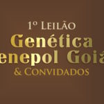 A raça Senepol semeada em todo estado de Goiás