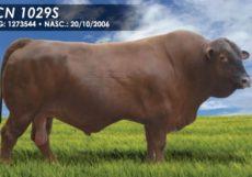 CN 1029S
