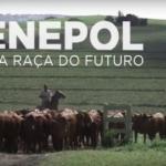 Senepol – A raça do futuro estreia no Canal Rural