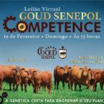 Estância Goud coloca 80 animais produtivos no leilão Competence