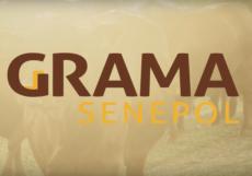 Grama-Senepol-GrandesFazendas-2018