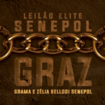 Grama e ZB Senepol ofertam genética superior no Leilão Graz dia 6 de agosto