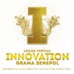 Leilão Innovation Grama vende 48 novilhas com opção de incremento