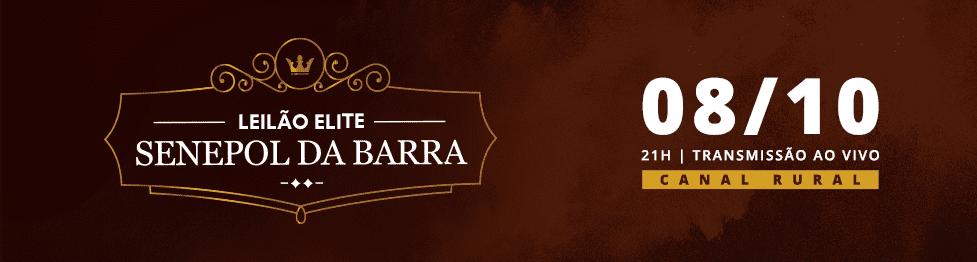 Leilão Elite Senepol da Barra 2019